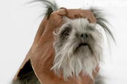 Super Bowl Spot: Let The Dogs Out (VW)
